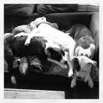 This is what we call a pitty pile up